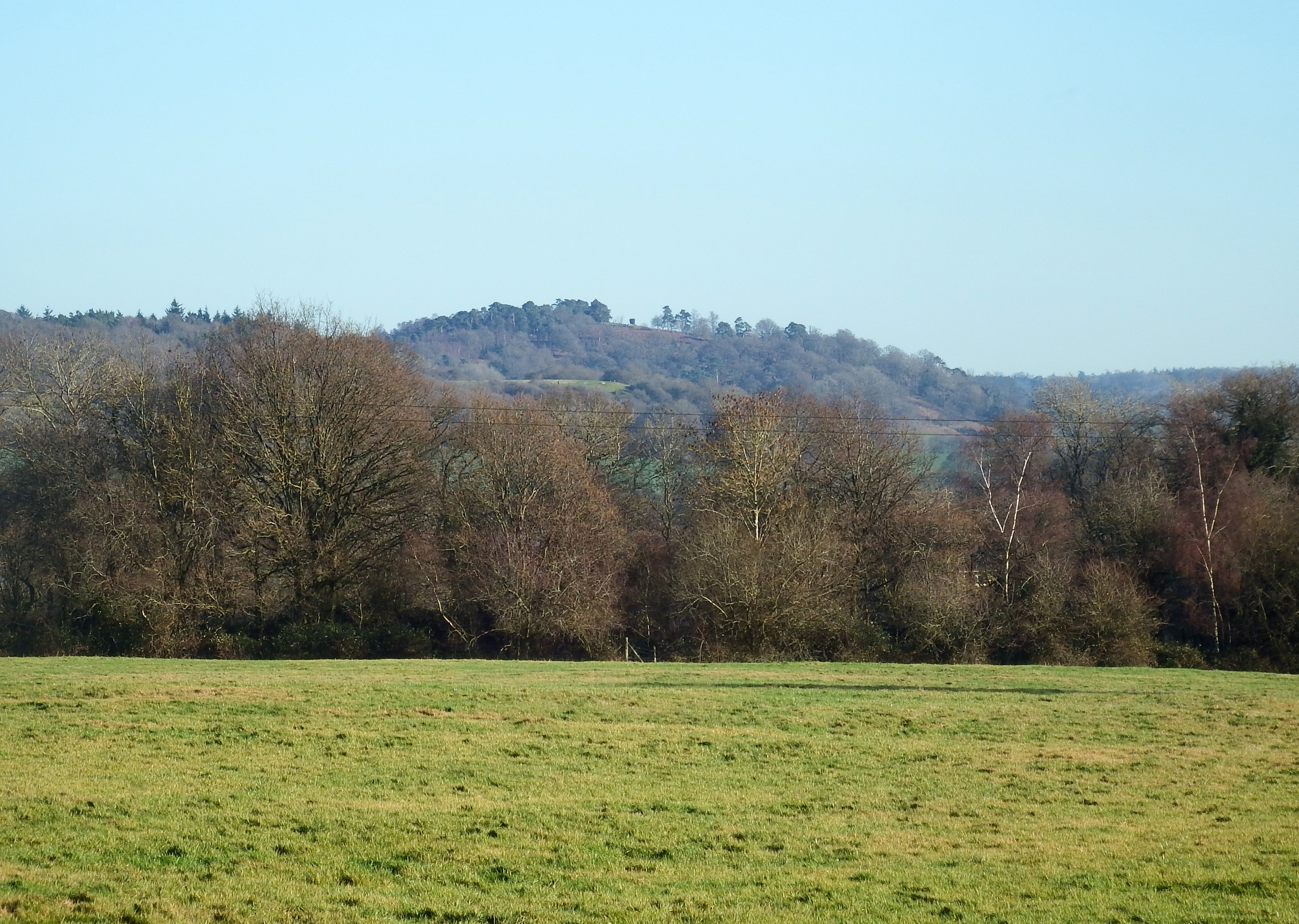 St Martha's Hill with church obscured by trees